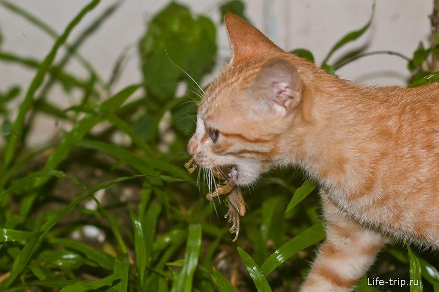 Кошек не меньше, чем собак, могут приходить в дом за лаской и едой