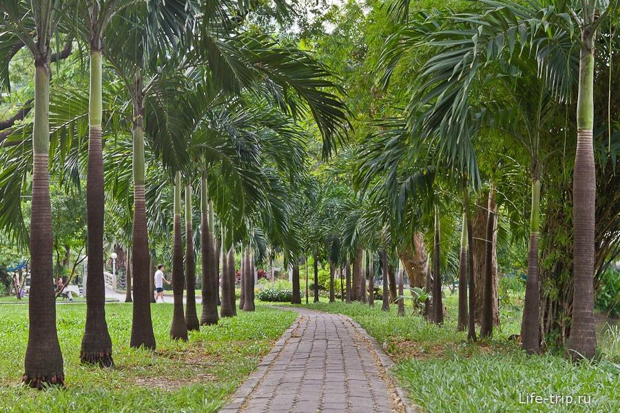 Пальмовая аллея в парке Люмпини