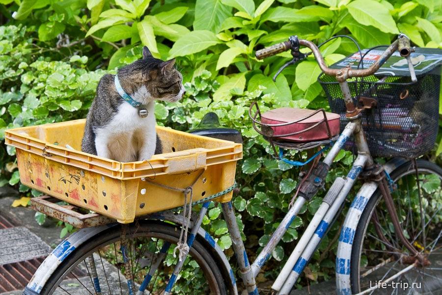 Кошки ждут своих хозяев