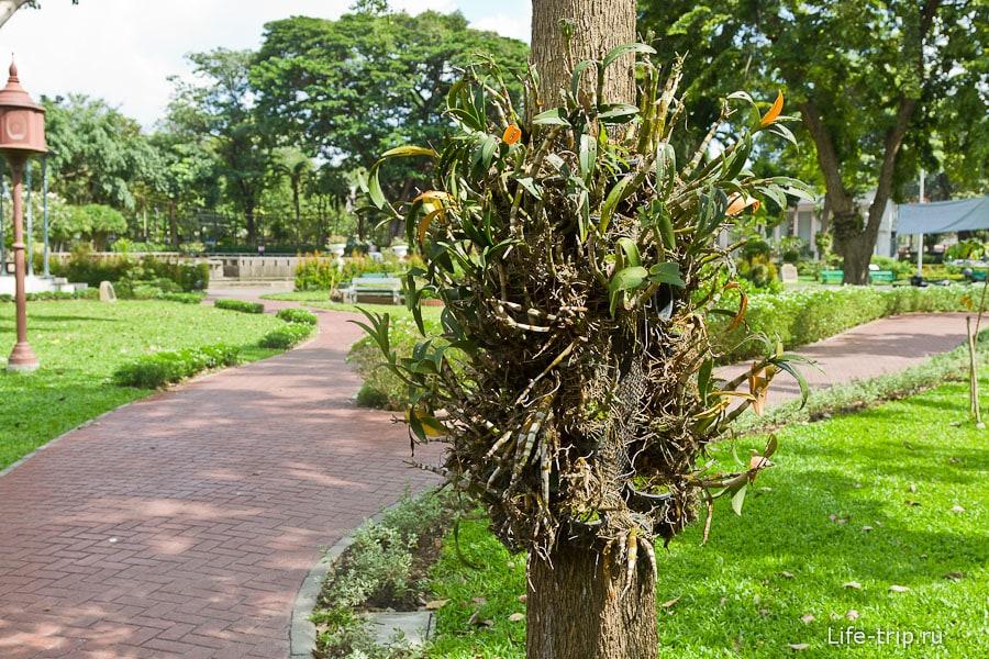 Растения паразиты, растут на стволе дерева