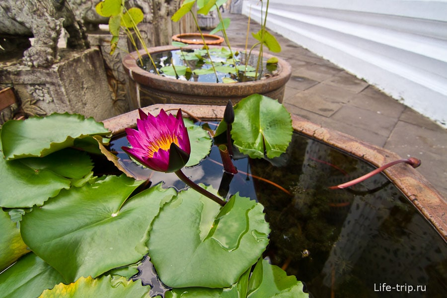 Цветок лотоса, непременный атрибут