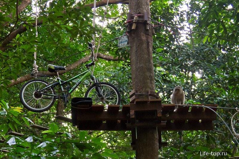 Обезьяны в Tree Top Adventure Park