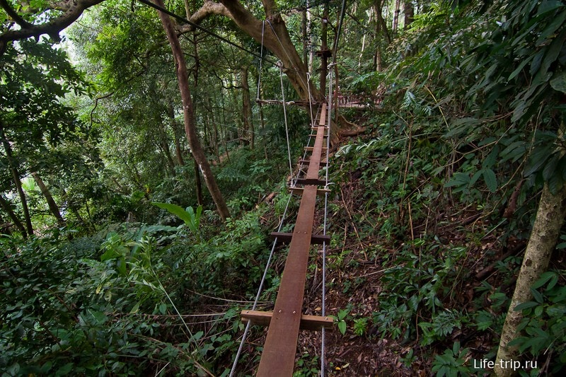 Веревочные мосты в Tree Top Adventure Park