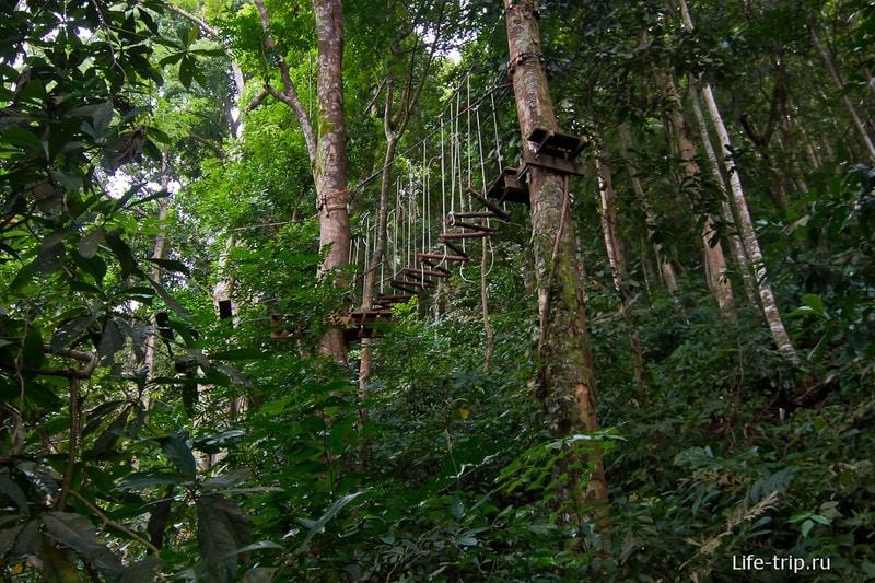 Одна из дорожек в Tree Top Adventure Park
