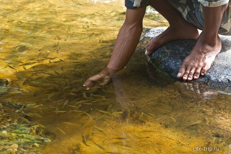 Охранник у водопада кормит рыбок хлебом