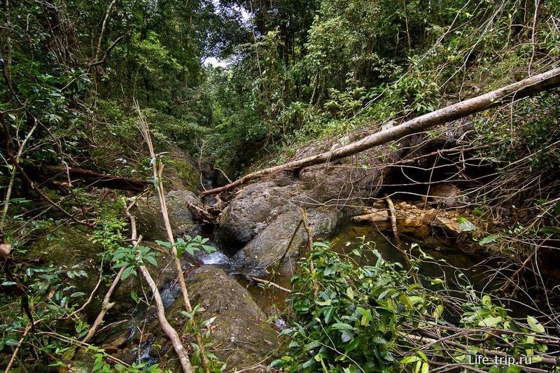 Тут настоящая природа и джунгли