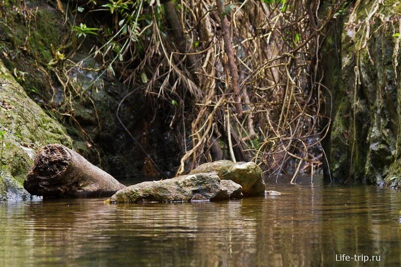 Klong Chao Luam Waterfall - настоящая природа и джунгли!