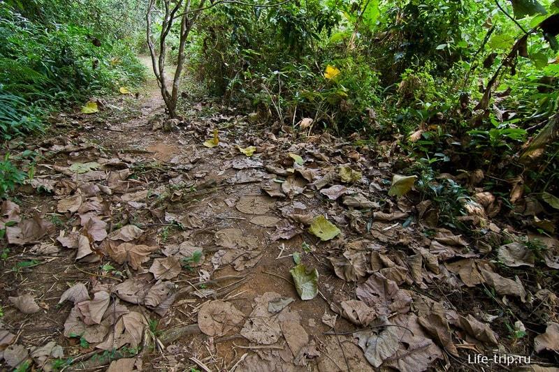 Дорожка к водопаду вся усыпана листьями