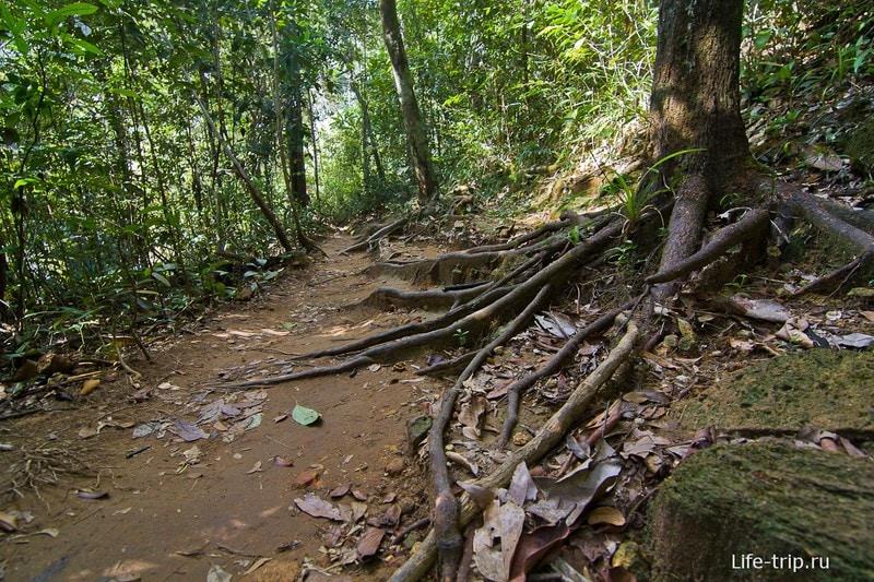 Дорожки еще джунгли, но уже цивильные