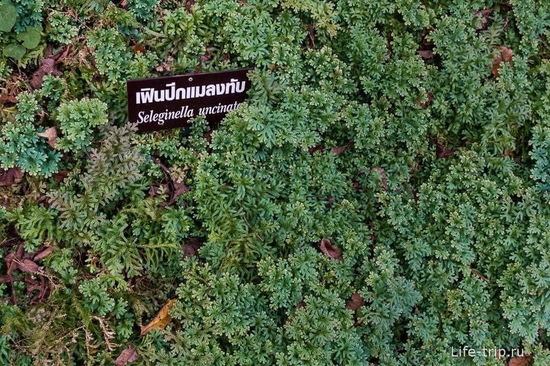 Национальный парк Doi Inthanon (22)