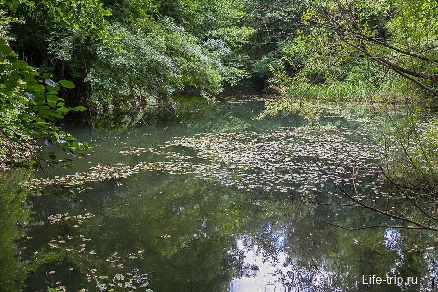 Почему-то мне кажется, что раньше этот пруд был голубым