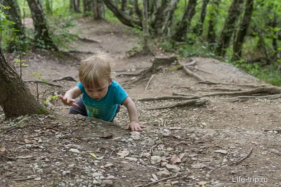 Улитка упорно ползла в гору, преодолевая корень за корнем