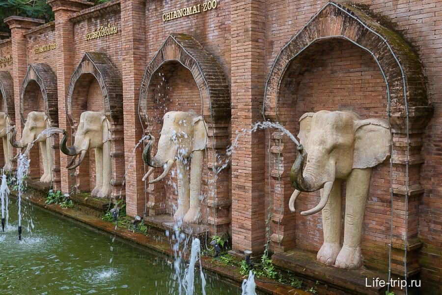 Сразу после входа в Зоопарк Чианг Мая