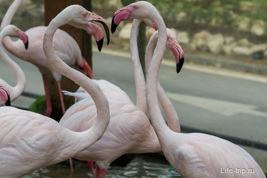 Фламинго, тоже у входа