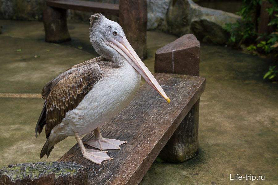 Это вроде пеликан