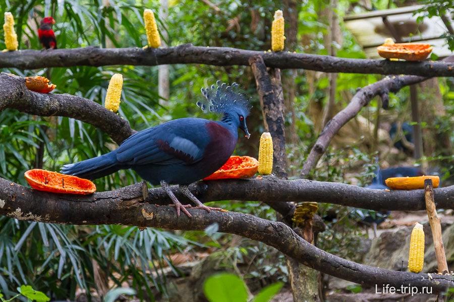 Какой-то синий птиц шипел на меня, думал, что папайю отниму