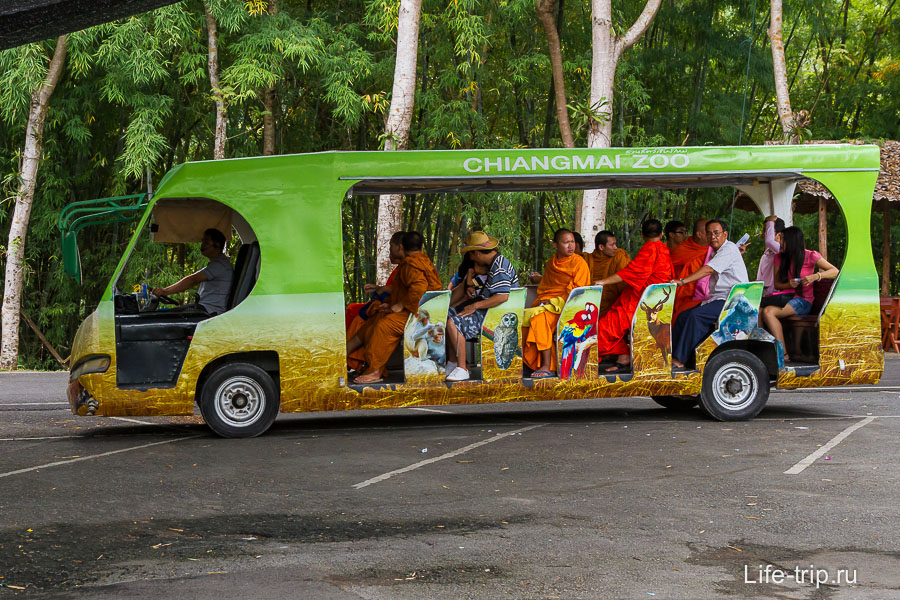 Автобусы для перемещения по зоопарку