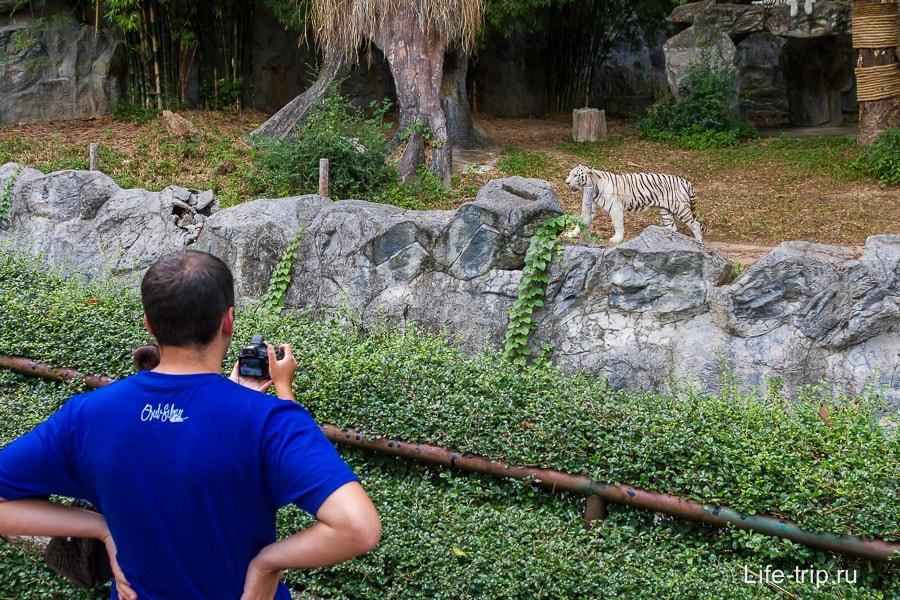 Тигру что-то не нравилось, метался взад вперед