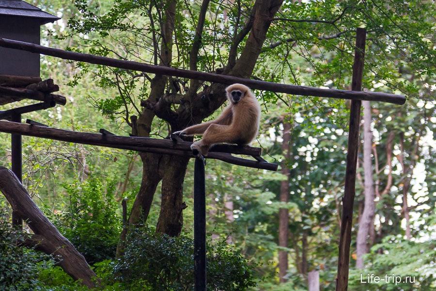 С одной стороны обезьяны сидят