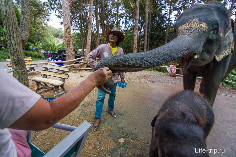 С другой стороны можно слонов покормить