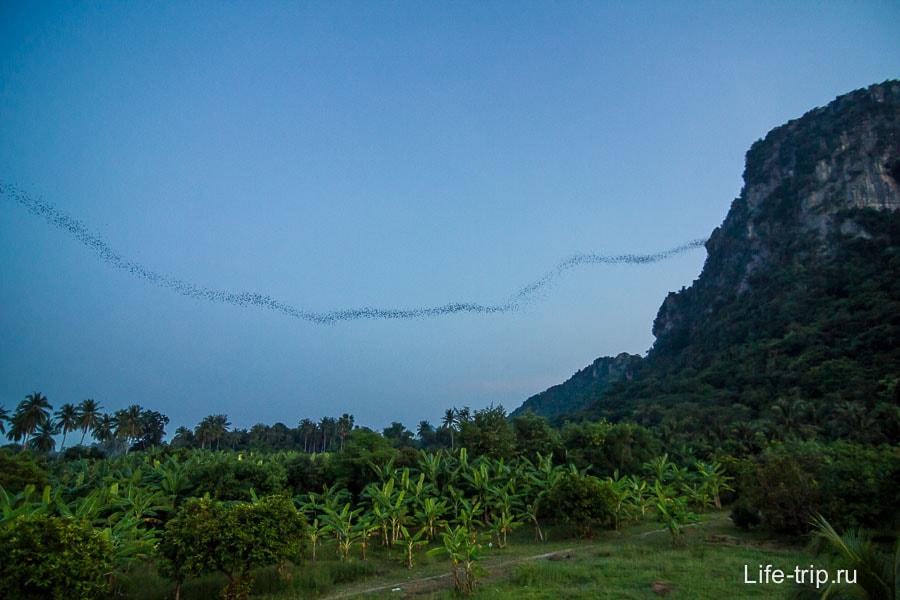 Гора летучих мышей около ЧаАм