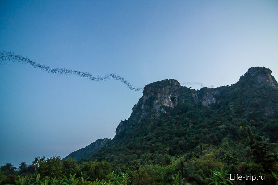 Гора летучих мышей около Ча Ам