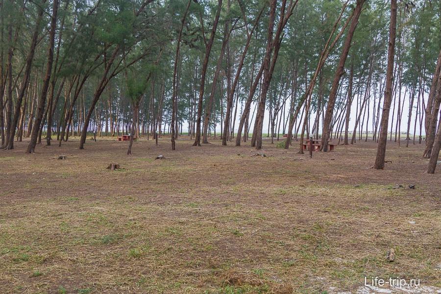 Прибрежная часть парка