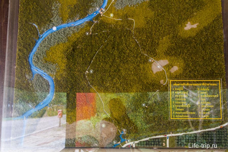 Карта мангровых зарослей