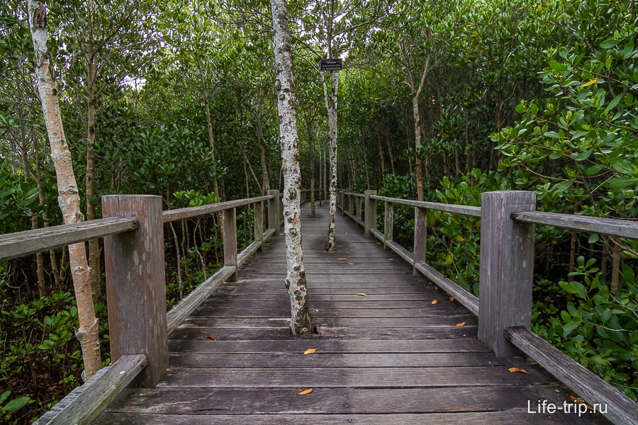Помосты максимально вписаны в ландшафт парка Пранабури