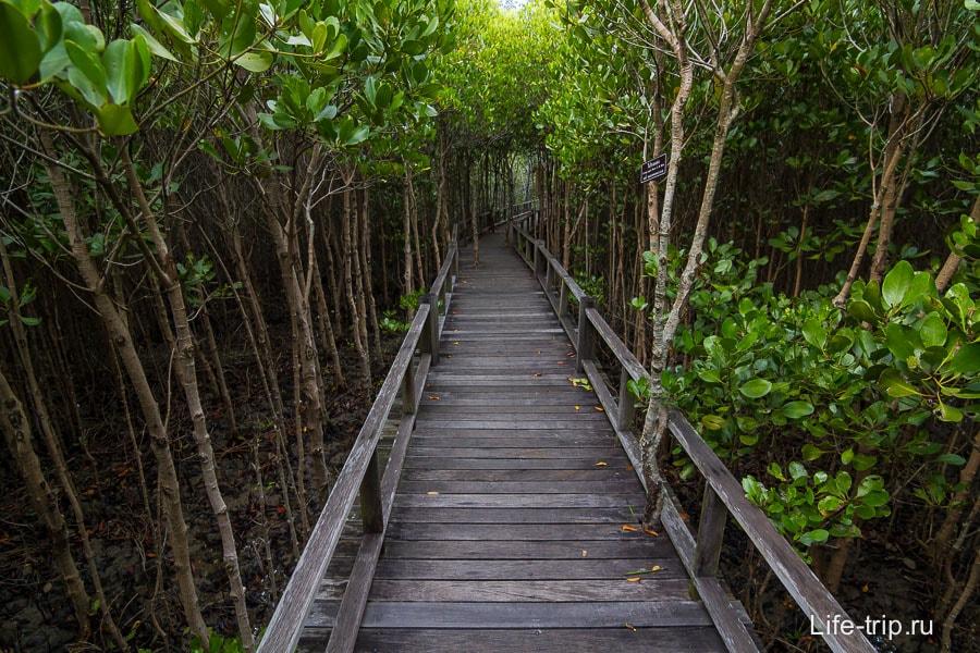 На обратном пути мангровые заросли чуть пониже