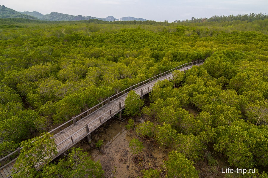 Вид со смотровой на мангровый лес