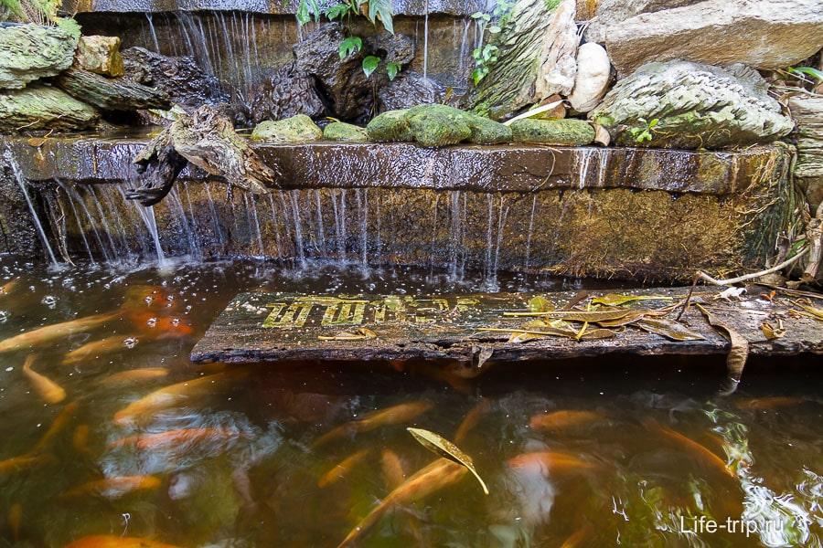 Мини-водопад и рыбки