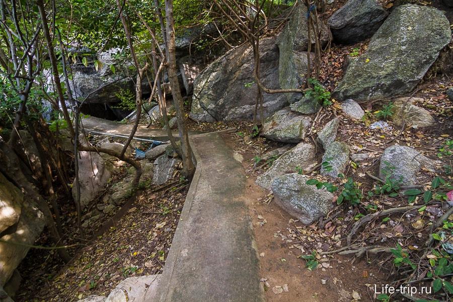 Очередная дорожка сквозь джунгли