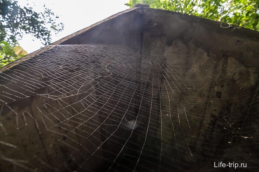 Как же в джунглях без паутины
