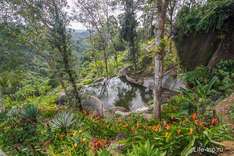 Красивый пруд на территории недалеко от оленей