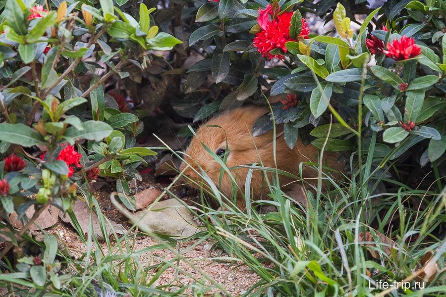 Где кролик? Не, не видел