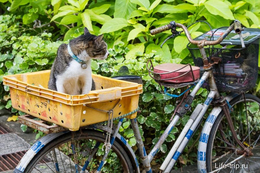 В Тайланд с собакой и кошкой - перевозка животных за границу