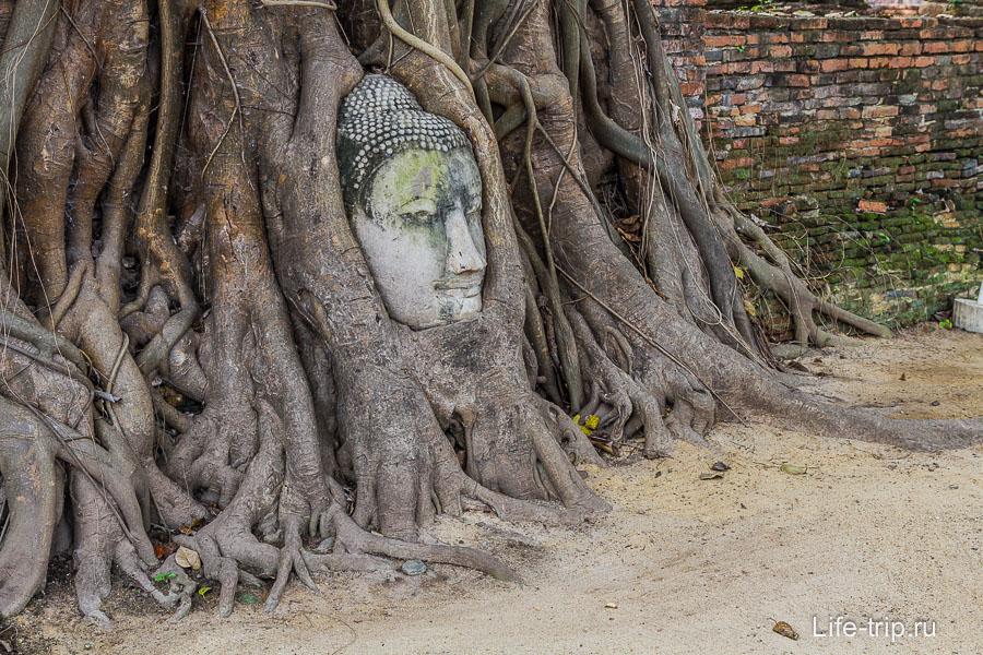 Знаменитая голова Будды в корнях дерева