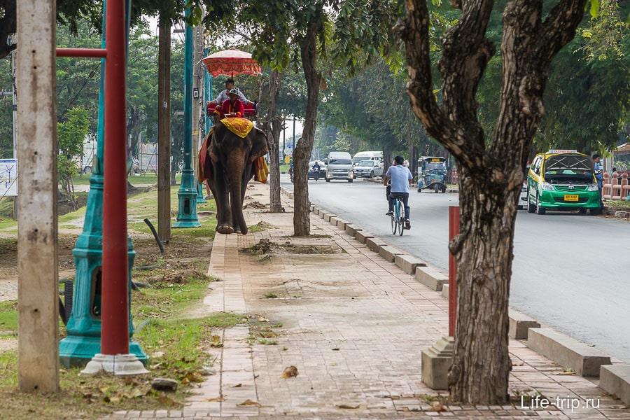 Тут вам и покатушки на слонах предложат