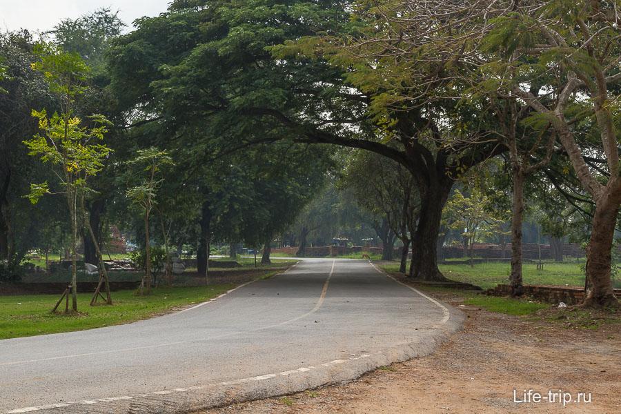 Иногда дороги превращаются в красивые аллеи