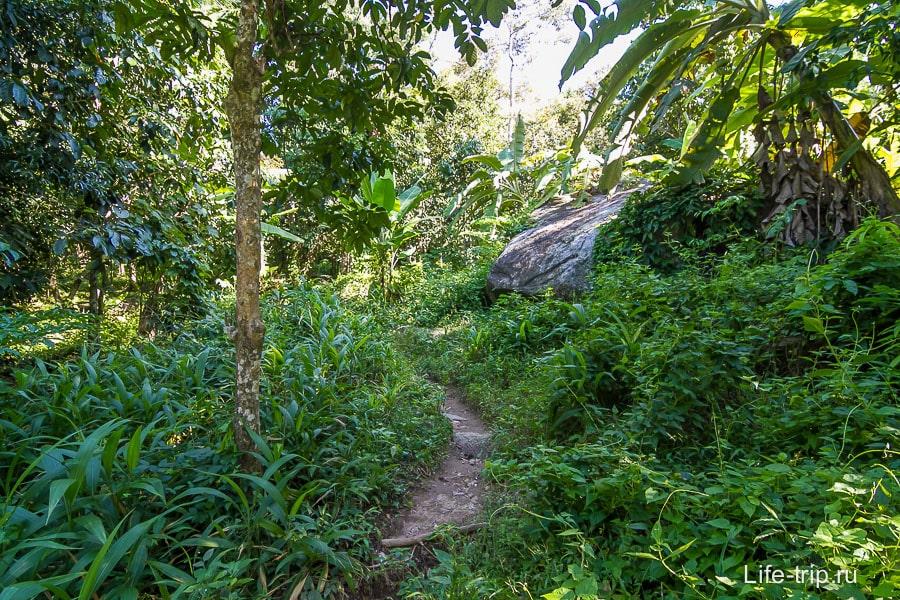 Тропинка сквозь настоящие джунгли