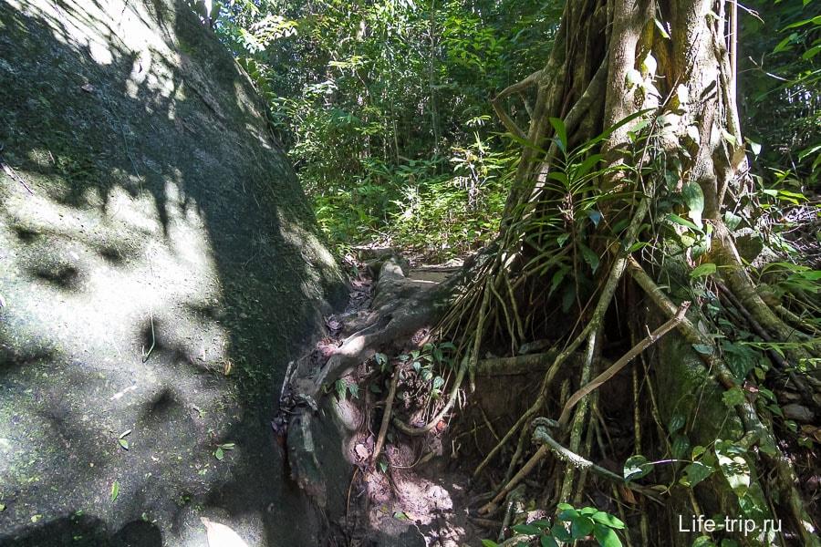 Лезем через корни и камни