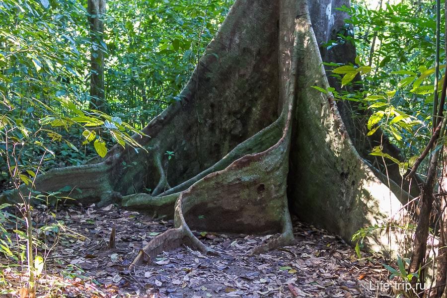 Дерево с очень интересным корнями