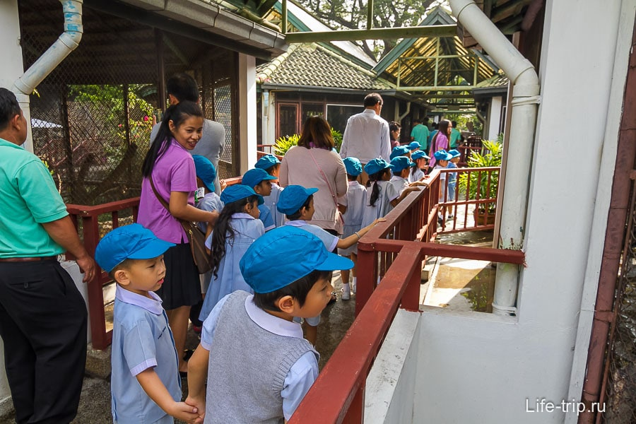 Тайский детсад на выгуле