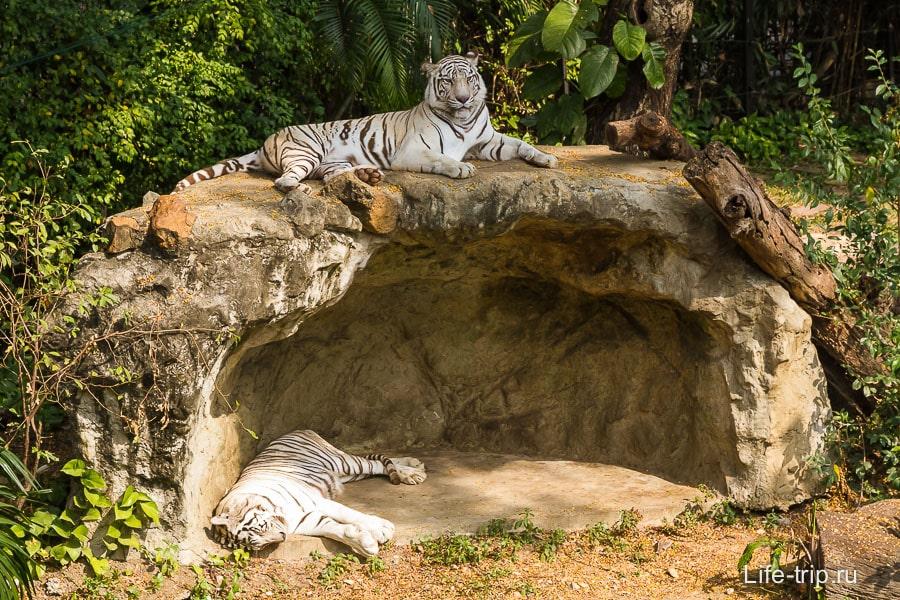 Тигры на приближении
