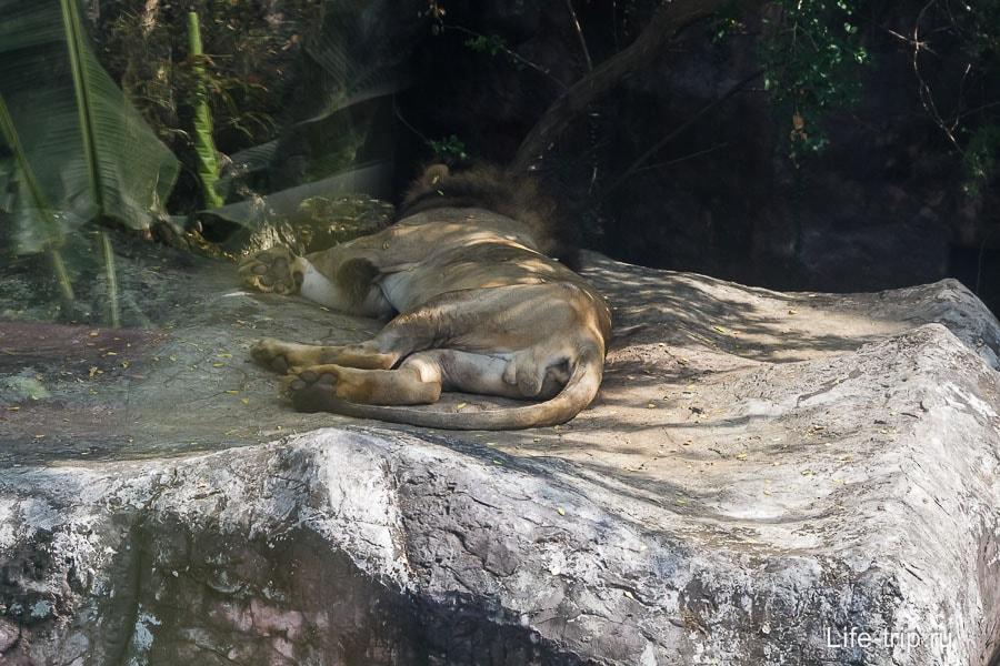 Спящий лев на приближении