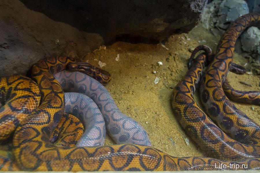 Со змеей тут явно что-то не так