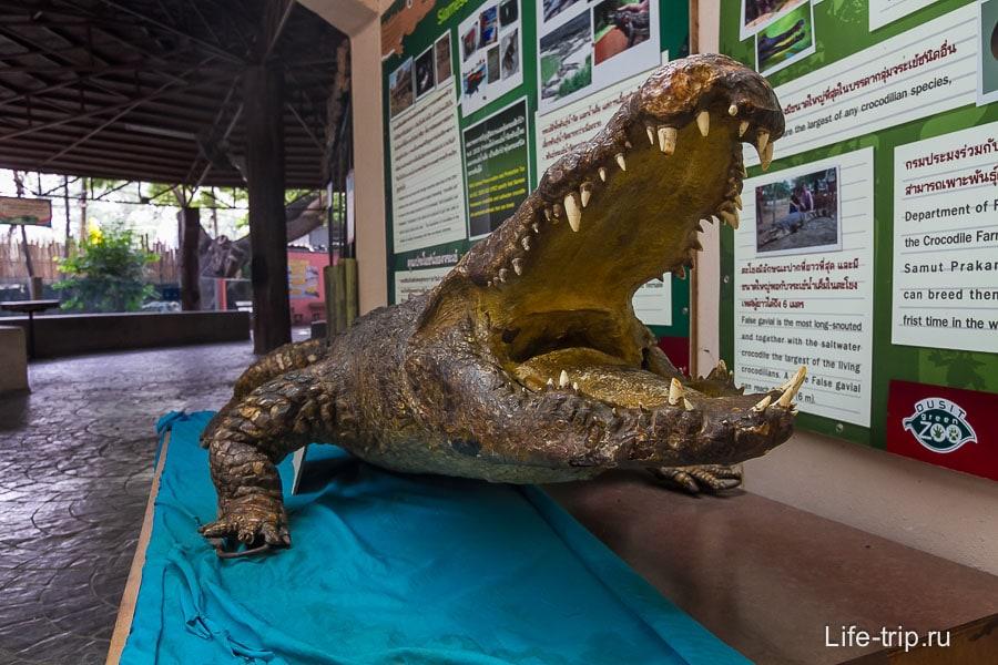 Сушенный крокодил