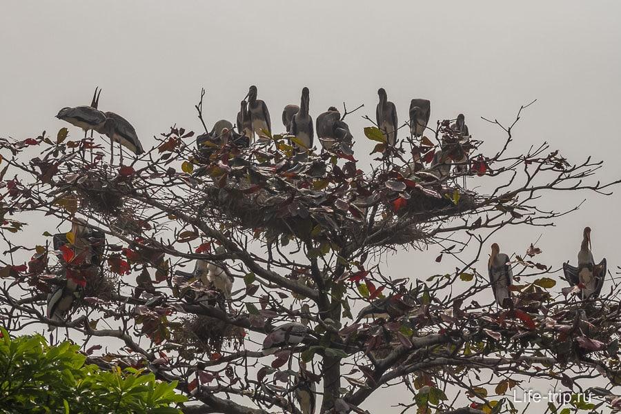 На дереве сидят какие-то большие птицы