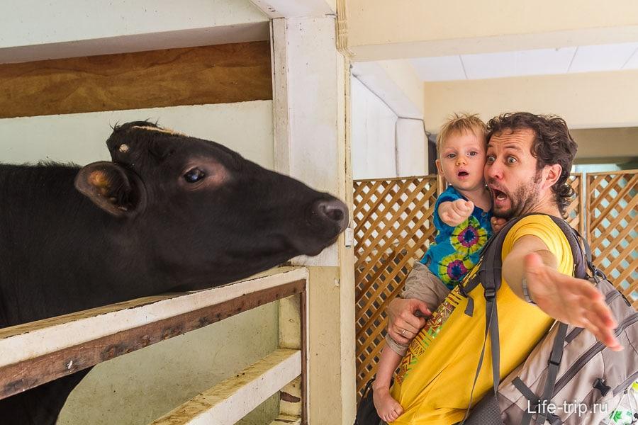 Зоопарк в Бангкоке описание фото как добраться